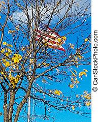 American flag in autumn tree