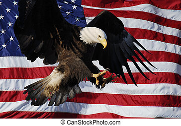 American Flag with Landing Eagle