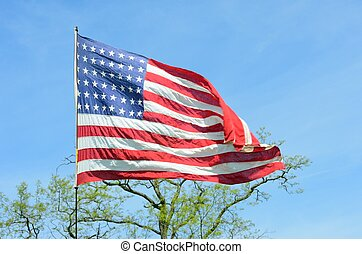 American flag with tree