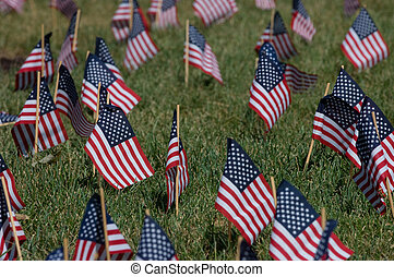 American flags for Memorial Day