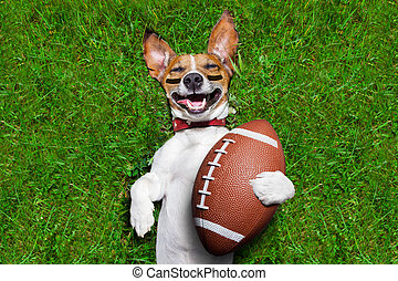 american football dog - soccer dog holding a rugby ball and...