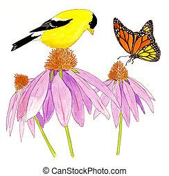 American Goldfinch - Spinus tristis - male on Purple Cone...