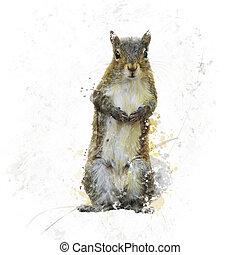 American Gray Squirrel watercolor