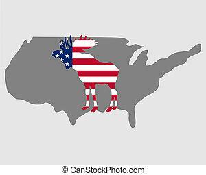American moose