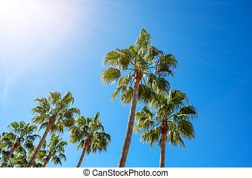 American palm trees in the summer with bright sunshine. Background