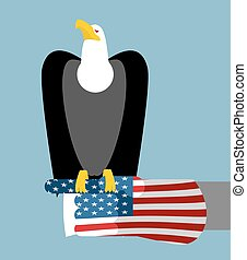 American patriotic eagle hunting. Bald eagle sitting on glove of USA flag. National symbol of America
