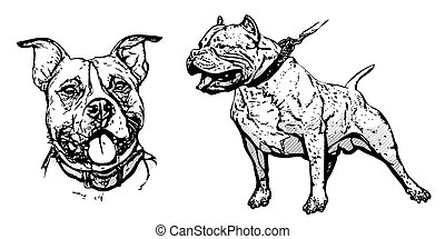 pitbull clip art vector graphics 440 pitbull eps clipart vector and rh canstockphoto com pitbull clip art free tribal pitbull clip art free tribal