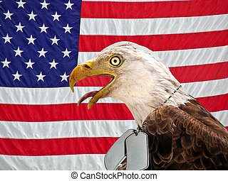 American Pride - Bald eagle wearing military dog tags on an...