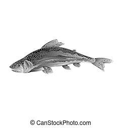 American rainbow trout as wrought metal vintage vector.eps