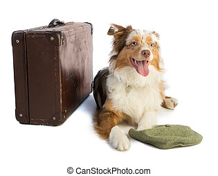 american shepherd with suitcase and cap