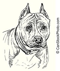 American Staffordshire Terrier vector hand drawing portrait