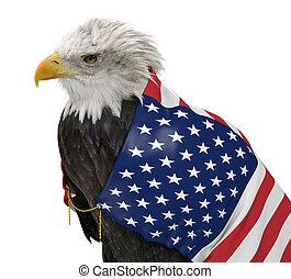 americano, águia calva, com, bandeira eua