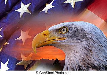 americano, águia calva, e, bandeira