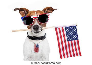 americano, cão