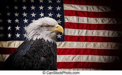 amerikaan, kale adelaar, met, flag.