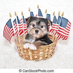 amerikai, kutyus