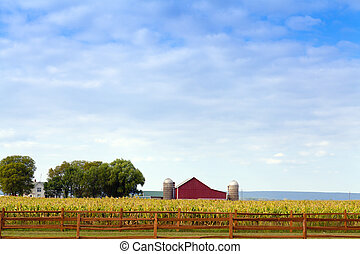amerikai, vidéki táj