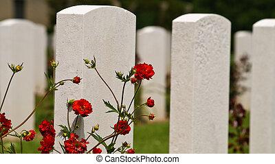 amerikan, kyrkogård, hos, normandie