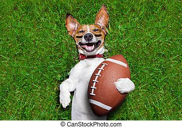 amerikanische , fußball, hund