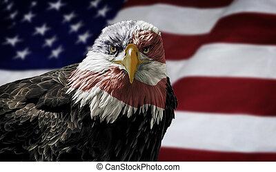 amerikanische , kahler adler, auf, fahne