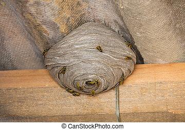 amiante, au-dessous, nid, toit, wasp's