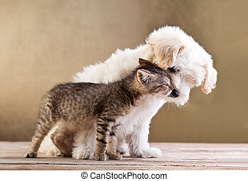 amigos, -, cão, e, gato, junto