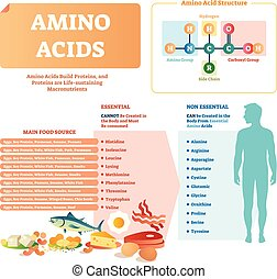 Amino acids vector illustration. List with food and...