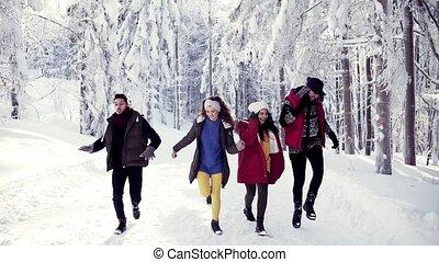 amis, neige, gai, forest., jeune, dehors, promenade, groupe, hiver