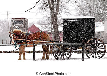Amish Buggy - Amish horse and buggy