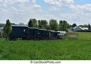 Amish Carriages Parked in a Field in Lancaster County -...