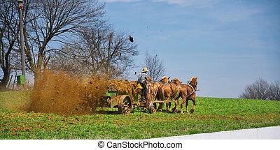 Amish Farmer Fertilizing the Farm
