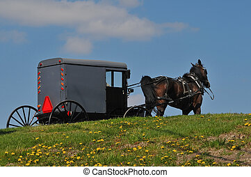 Amish horse and buggy at spring time in Lancaster...