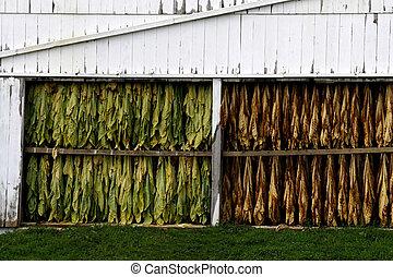 amish, mængder