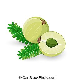Amla Fruit Vector Illustration Phyllanthus Emblica - Amla...