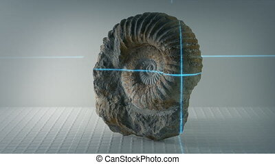 Ammonite Ancient Shell Fossil Being Scanned - Laser scans a...