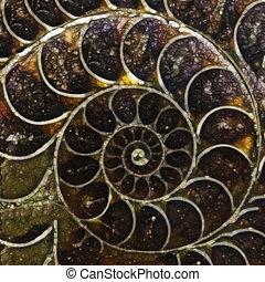 ammonite, coquille, formulaire, résumé, illustration, fond, fractal