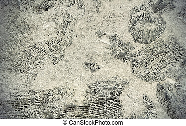 ammonite, fossiles, rocher