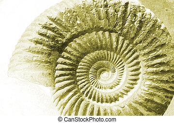 ammonite, négatif