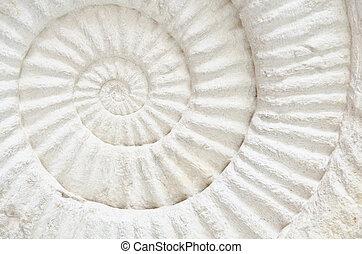 ammonite, préhistorique, fossile