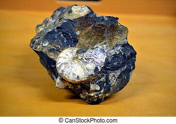 ammonite, shimmering, massive, fossile, roccia, bianco