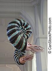 Ammonite - Recreated sculptures of Ammonite - extinct marine...