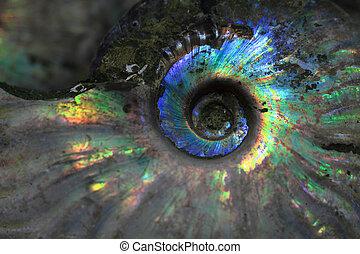 ammonites, fossile, fond