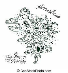 Amoeba Hand-drawn image