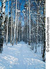 Among birches