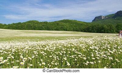Among blooming daisies