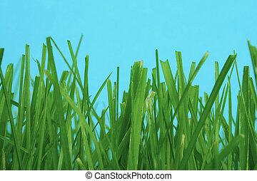 among the grass