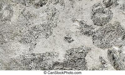 amonite, fósseis, rocha