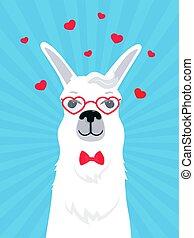 amor, card., valentines, saudação, glasses., laço arco, guanaco., lhama, retrato, heart-shaped, alpaca., adorável, dia