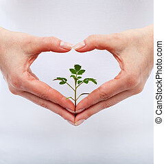 amor, e, proteja, natureza