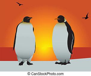 amor, penguin.